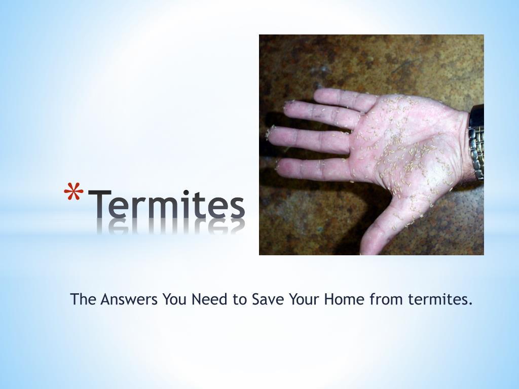 termites l.