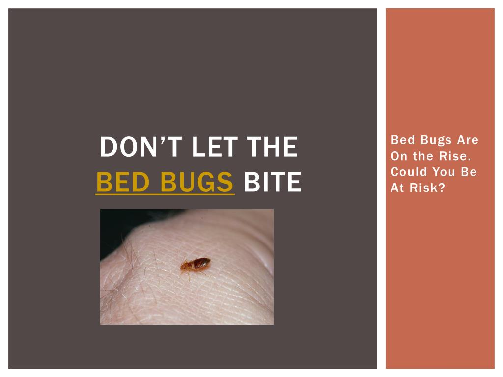 don t let the bed bugs bite l.