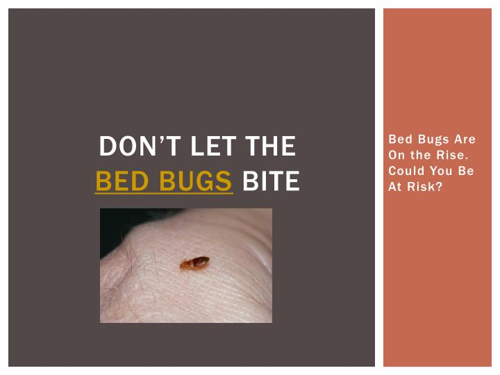don t let the bed bugs bite n.