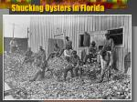 shucking oysters in florida