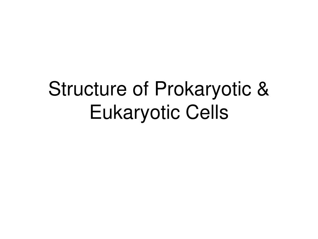 structure of prokaryotic eukaryotic cells l.