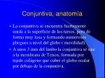 conjuntiva anatom a4
