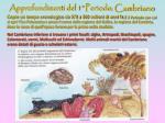approfondimenti del 1 periodo cambriano