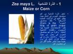 1 zea mays l maize or corn