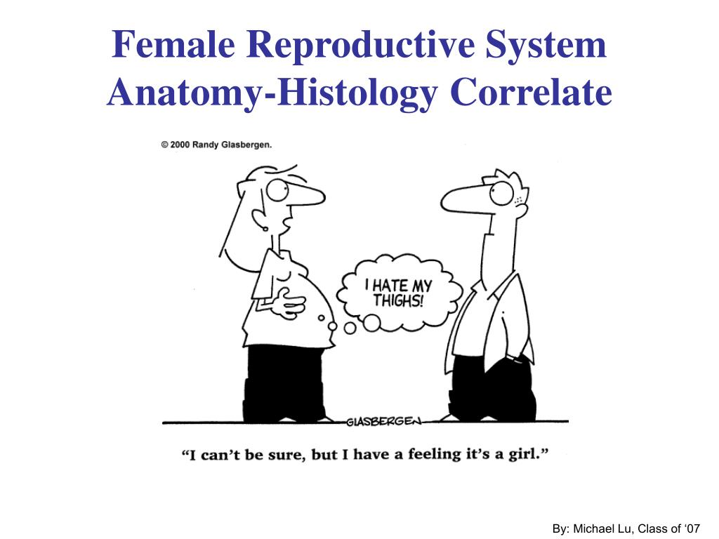 female reproductive system anatomy histology correlate l.