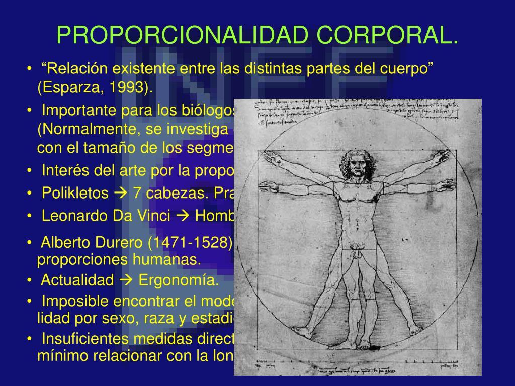 proporcionalidad corporal l.