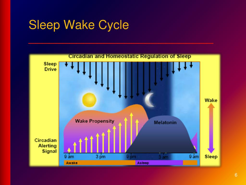 Sleep Wake Cycle