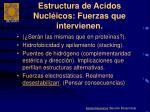 estructura de acidos nucl icos fuerzas que intervienen