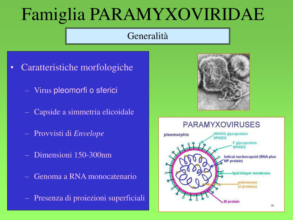 famiglia paramyxoviridae l.