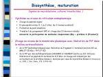 biosynth se maturation lign es de neuroblastome cultures transfect es