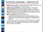 distribution anatomique ubiquitaire 2