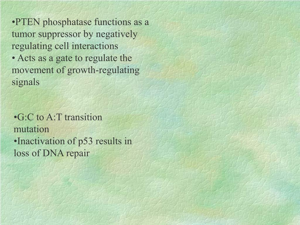 PTEN phosphatase functions as a tumor suppressor by negatively regulating cell interactions