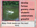 many think swans are the most bird