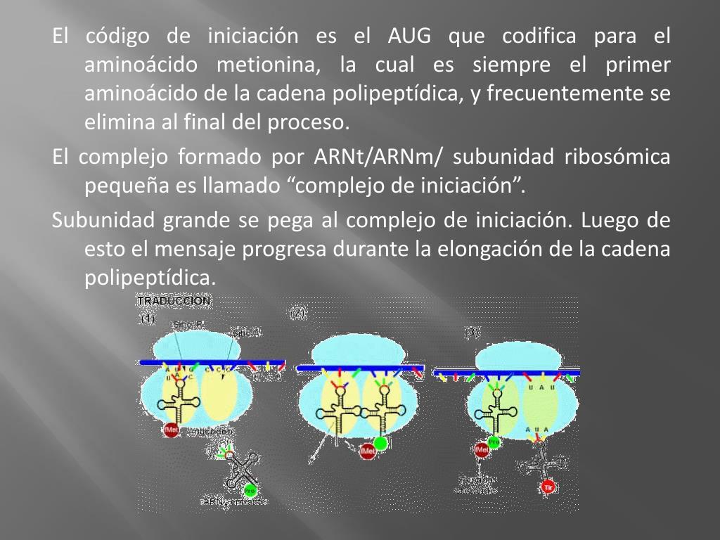 El código de iniciación es el AUG que codifica para el aminoácido metionina, la cual es siempre el primer aminoácido de la cadena polipeptídica, y frecuentemente se elimina al final del proceso.