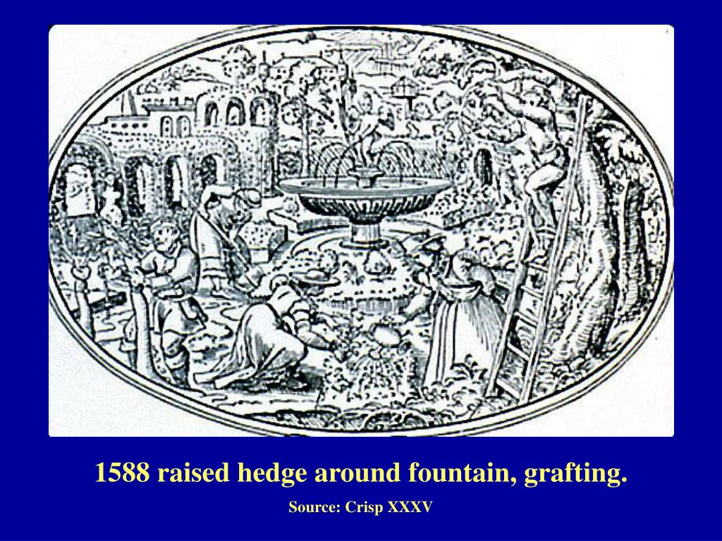 1588 raised hedge around fountain, grafting.