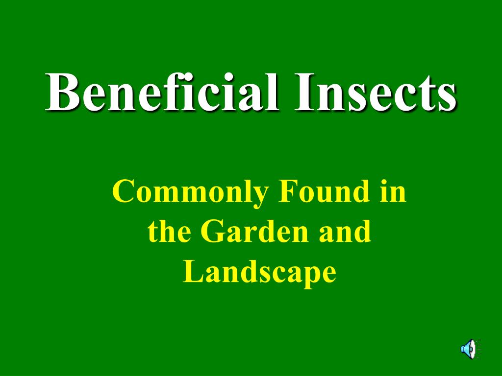 beneficial insects l.
