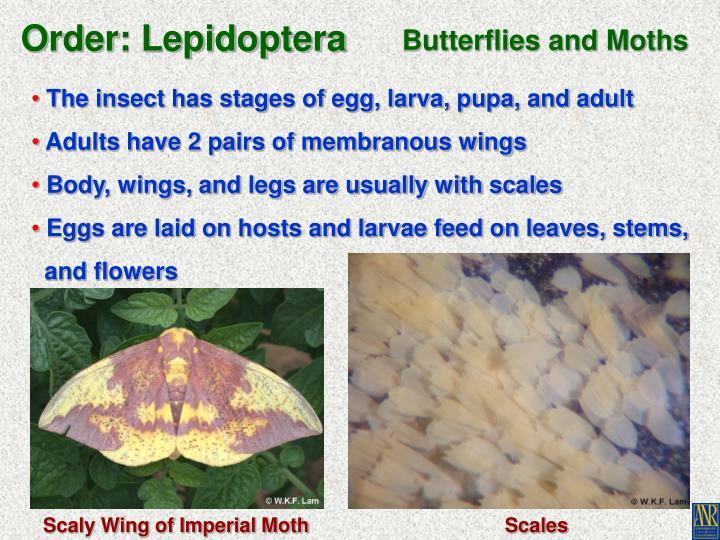 Order: Lepidoptera