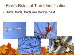 rick s rules of tree identification