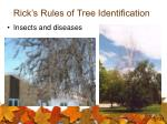 rick s rules of tree identification31