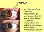 pupila