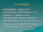 cl chauvoei27