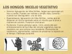 los hongos micelio vegetativo14