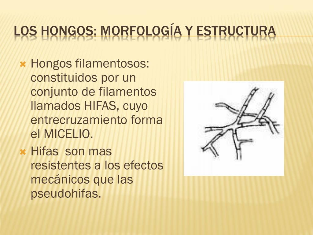 Ppt Hongos Powerpoint Presentation Free Download Id 231383