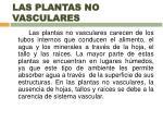 las plantas no vasculares