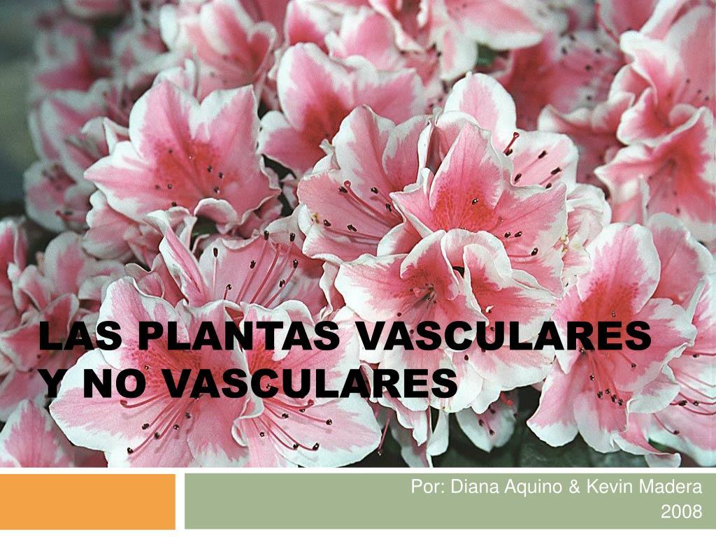 las plantas vasculares y no vasculares l.