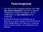fotorreceptores25
