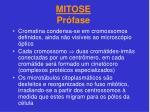 mitose pr fase