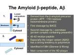the amyloid b peptide a b