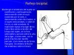 reflejo bicipital