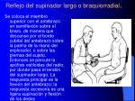 reflejo del supinador largo o braquiorradial