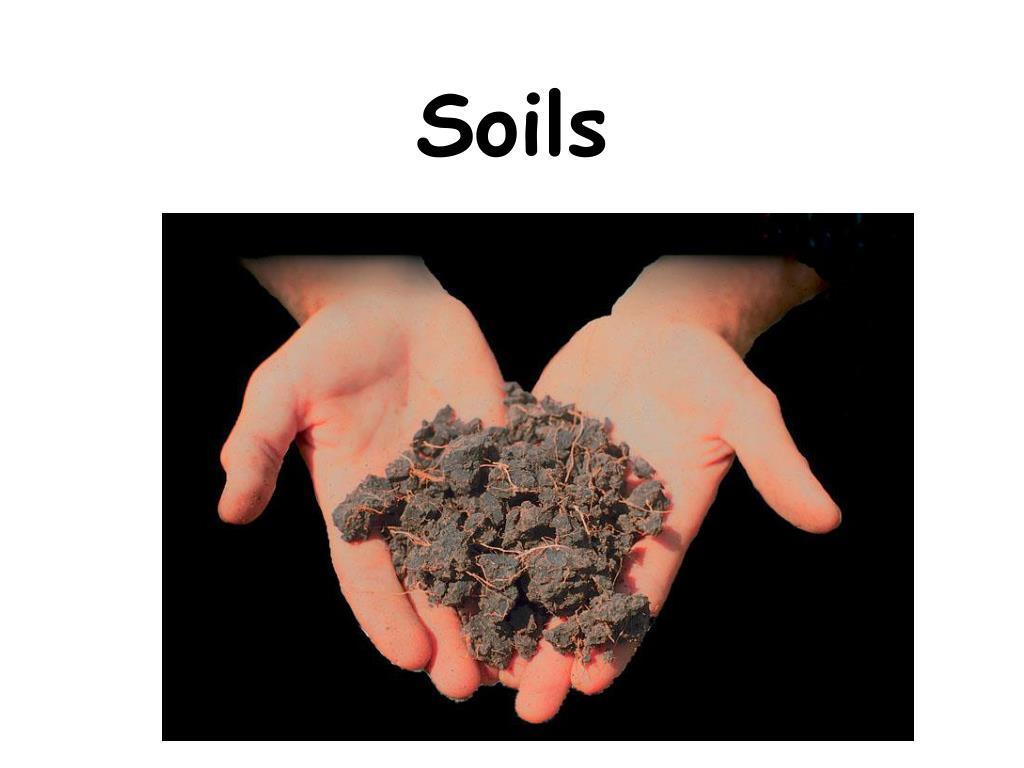 soils l.