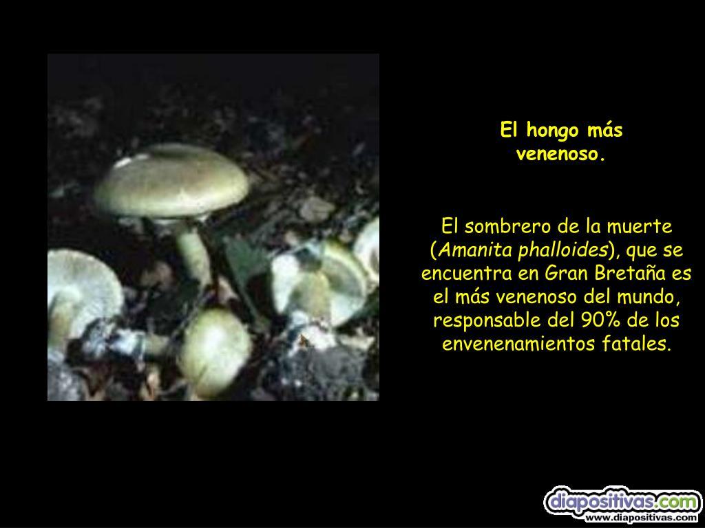El hongo más venenoso.