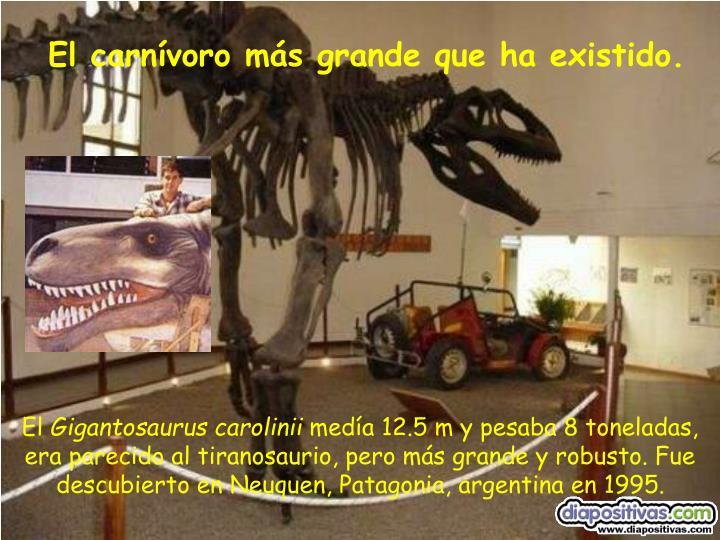 El carnívoro más grande que ha existido.