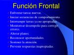 funci n frontal