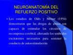 neuroanatom a del refuerzo positivo