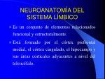 neuroanatom a del sistema l mbico