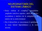 neuroanatom a del sistema l mbico7