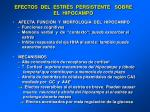efectos del estr s persistente sobre el hipocampo