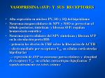 vasopresina avp y sus receptores