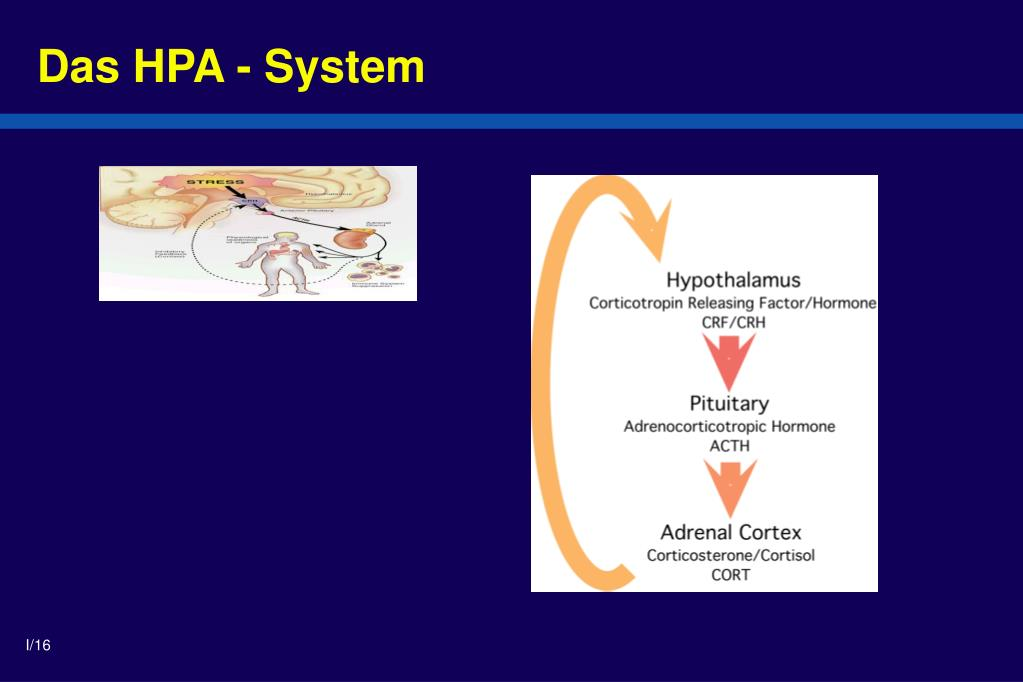 Das HPA - System