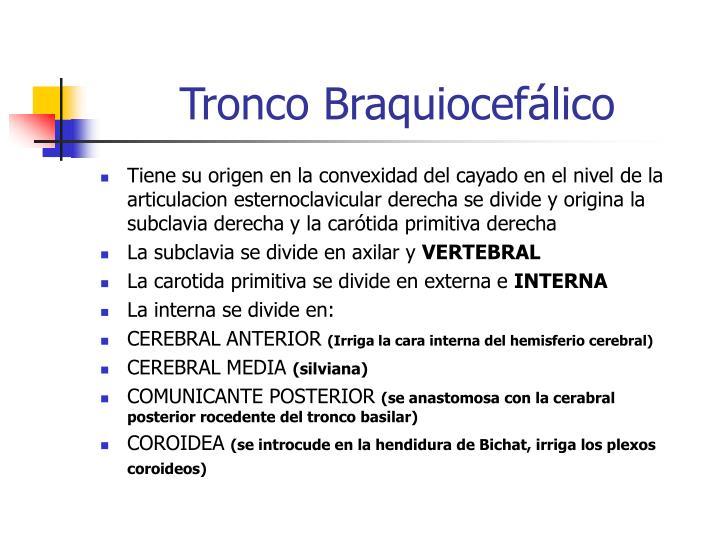 PPT - IRRIGACION DEL CEREBRO PowerPoint Presentation - ID:232395
