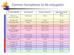 common fluorophores for ab conjugation