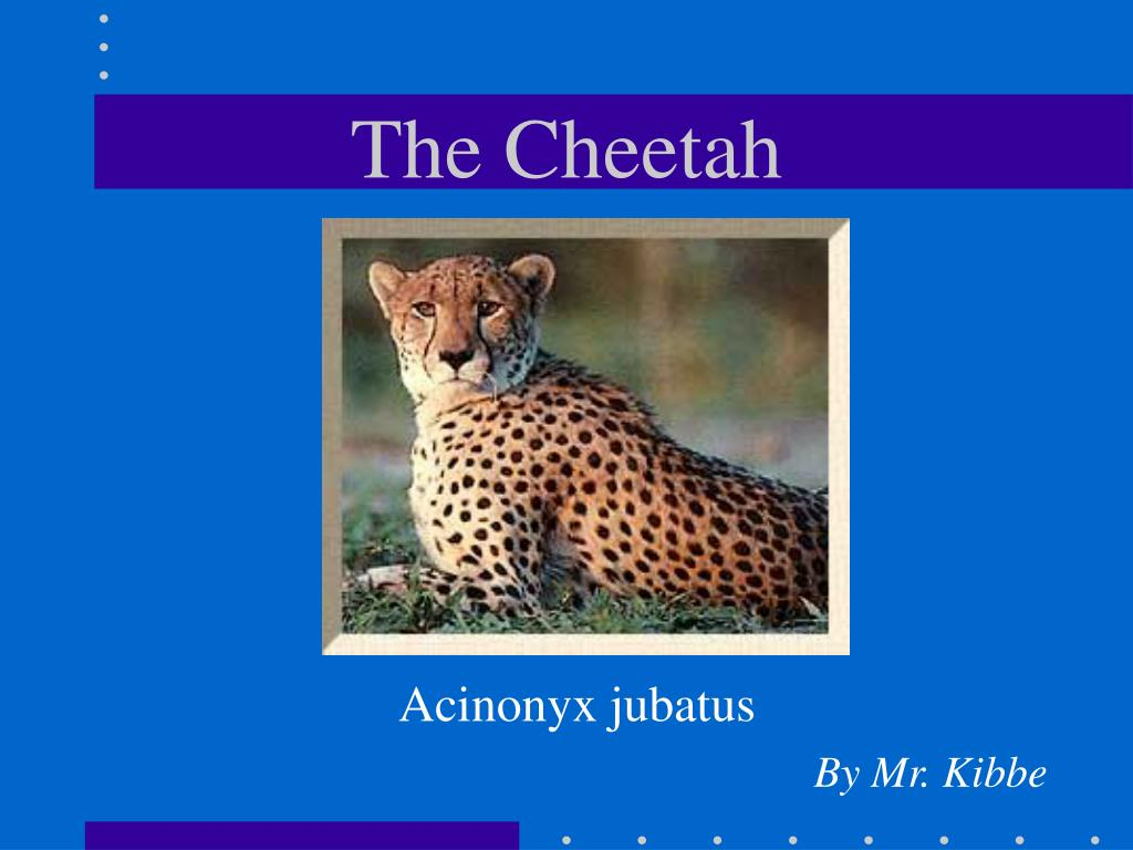 the cheetah l.