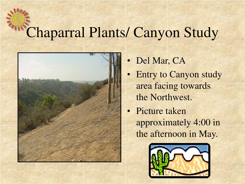 chaparral plants canyon study l.