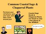common coastal sage chaparral plants