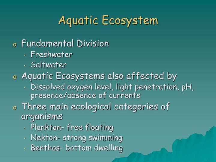 3 categories of organisms